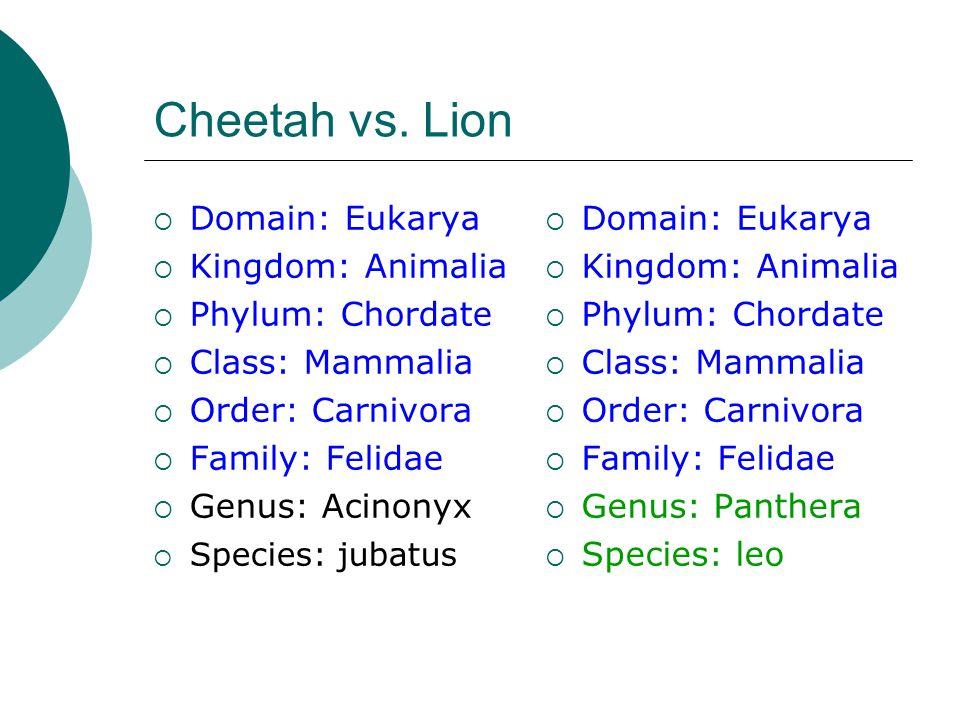 Cheetah vs.
