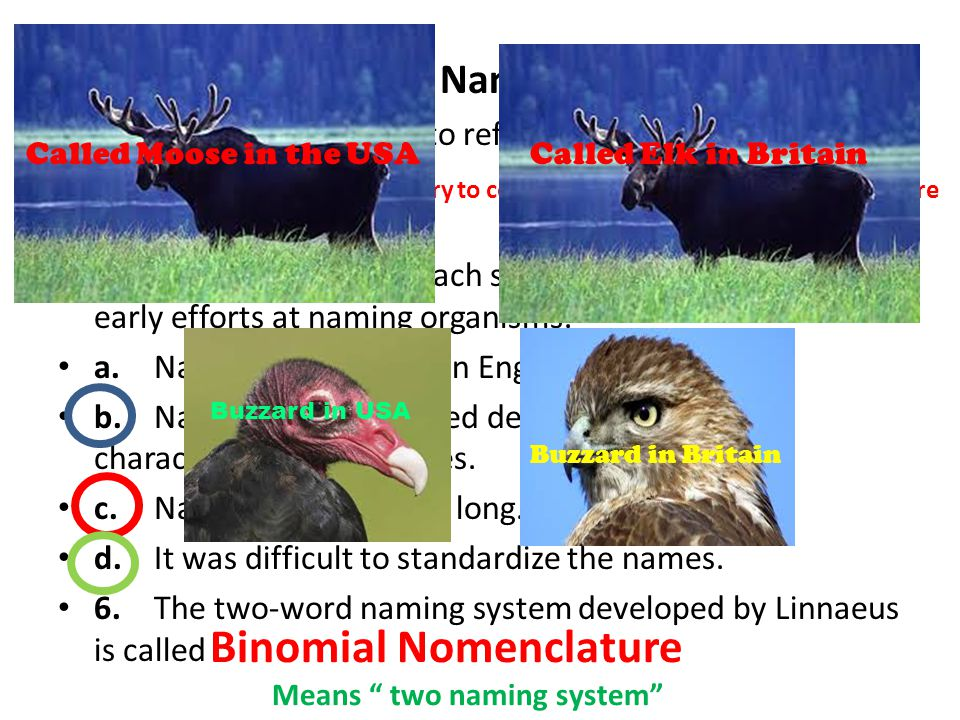Assigning Scientific Names (page 448) 4.Why is it confusing to refer to organisms by common names? 5.Circle the letter of each sentence that is true a