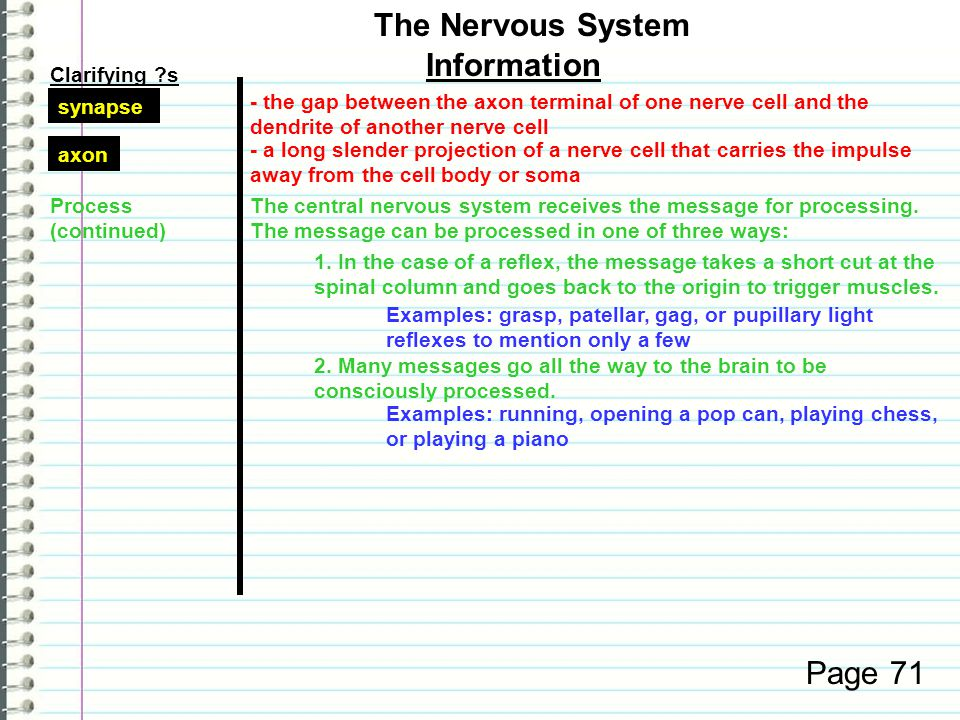 Clarifying ?s Information Page 71 The Nervous System Examples: grasp, patellar, gag, or pupillary light reflexes to mention only a few Examples: running, opening a pop can, playing chess, or playing a piano Process (continued) The central nervous system receives the message for processing.