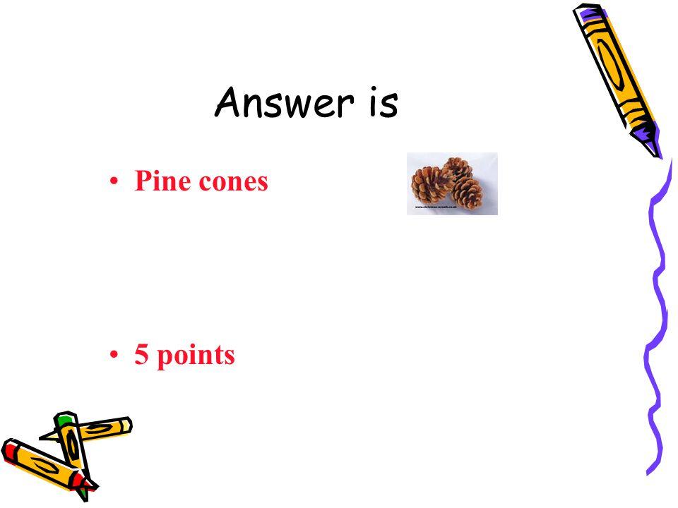 Question 5 Austria: Pine cones Sea shells Rabbit fur Coffee beans