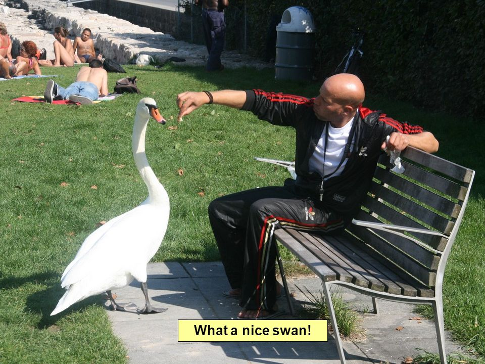 What a nice swan!