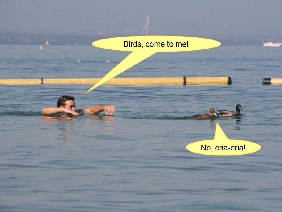 Birds, come to me! No, cria-cria!