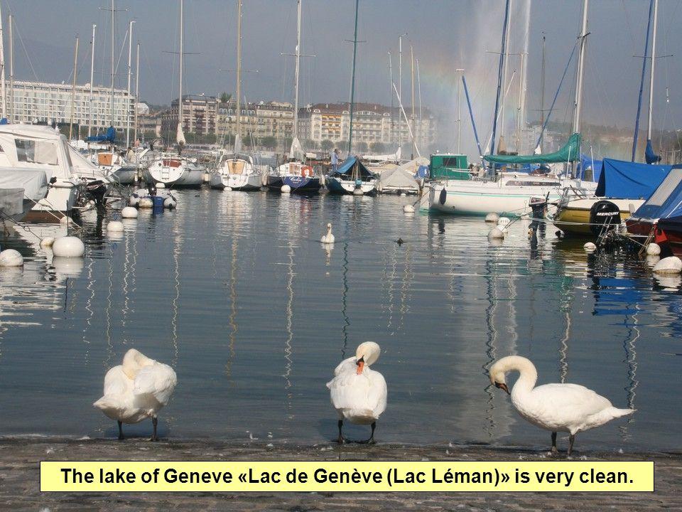 The lake of Geneve «Lac de Genève (Lac Léman)» is very clean.