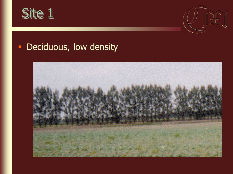 Site 1  Deciduous, low density