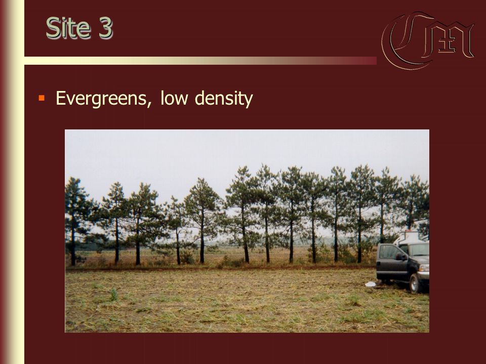 Site 3  Evergreens, low density