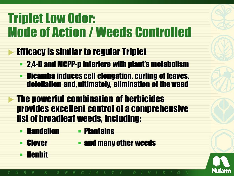 T U R F & S P E C I A L T Y D I V I S I O N Triplet Low Odor: Mode of Action / Weeds Controlled  Efficacy is similar to regular Triplet  2,4-D and MCPP-p interfere with plant's metabolism  Dicamba induces cell elongation, curling of leaves, defoliation and, ultimately, elimination of the weed  The powerful combination of herbicides provides excellent control of a comprehensive list of broadleaf weeds, including:  Dandelion Plantains  Clover and many other weeds  Henbit  Efficacy is similar to regular Triplet  2,4-D and MCPP-p interfere with plant's metabolism  Dicamba induces cell elongation, curling of leaves, defoliation and, ultimately, elimination of the weed  The powerful combination of herbicides provides excellent control of a comprehensive list of broadleaf weeds, including:  Dandelion Plantains  Clover and many other weeds  Henbit
