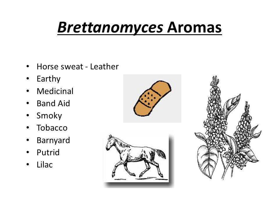 Brettanomyces Aromas Horse sweat - Leather Earthy Medicinal Band Aid Smoky Tobacco Barnyard Putrid Lilac