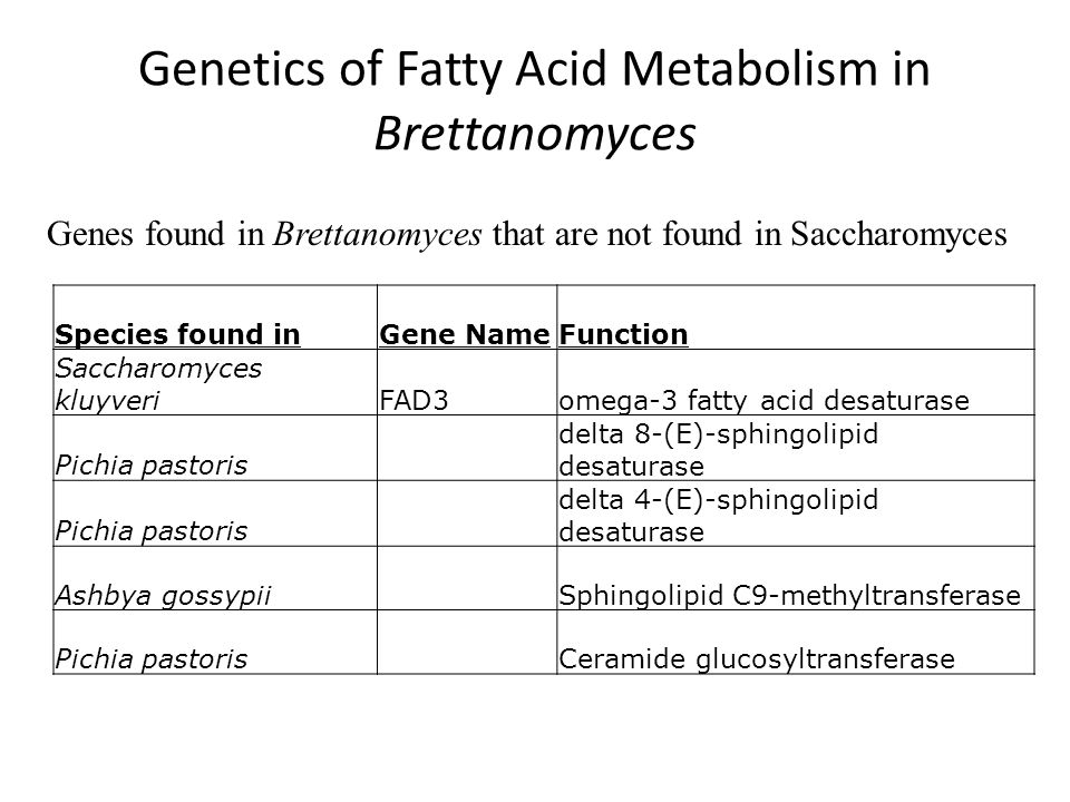 Genetics of Fatty Acid Metabolism in Brettanomyces Species found inGene NameFunction Saccharomyces kluyveriFAD3omega-3 fatty acid desaturase Pichia pastoris delta 8-(E)-sphingolipid desaturase Pichia pastoris delta 4-(E)-sphingolipid desaturase Ashbya gossypiiSphingolipid C9-methyltransferase Pichia pastorisCeramide glucosyltransferase Genes found in Brettanomyces that are not found in Saccharomyces