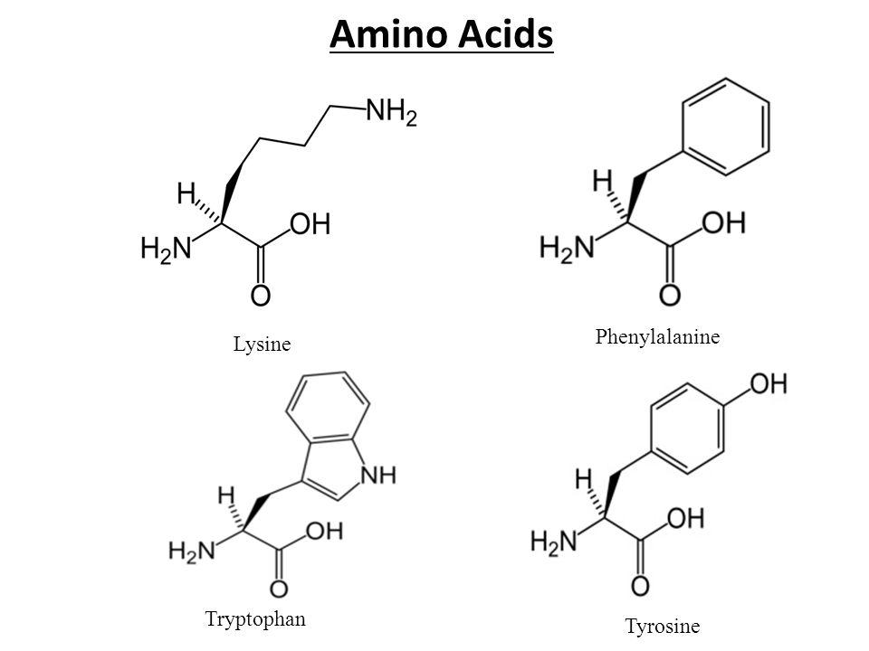 Amino Acids Tyrosine Phenylalanine Tryptophan Lysine