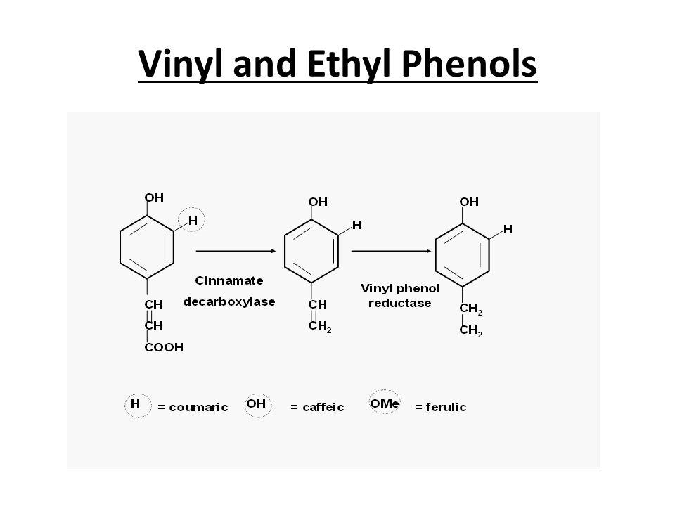 Vinyl and Ethyl Phenols