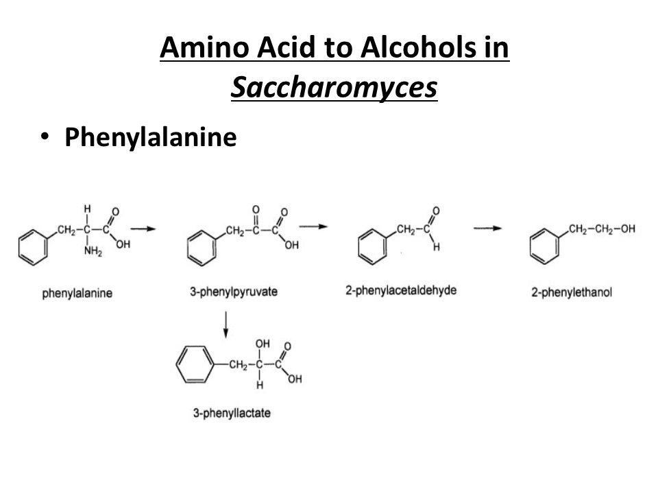 Amino Acid to Alcohols in Saccharomyces Phenylalanine