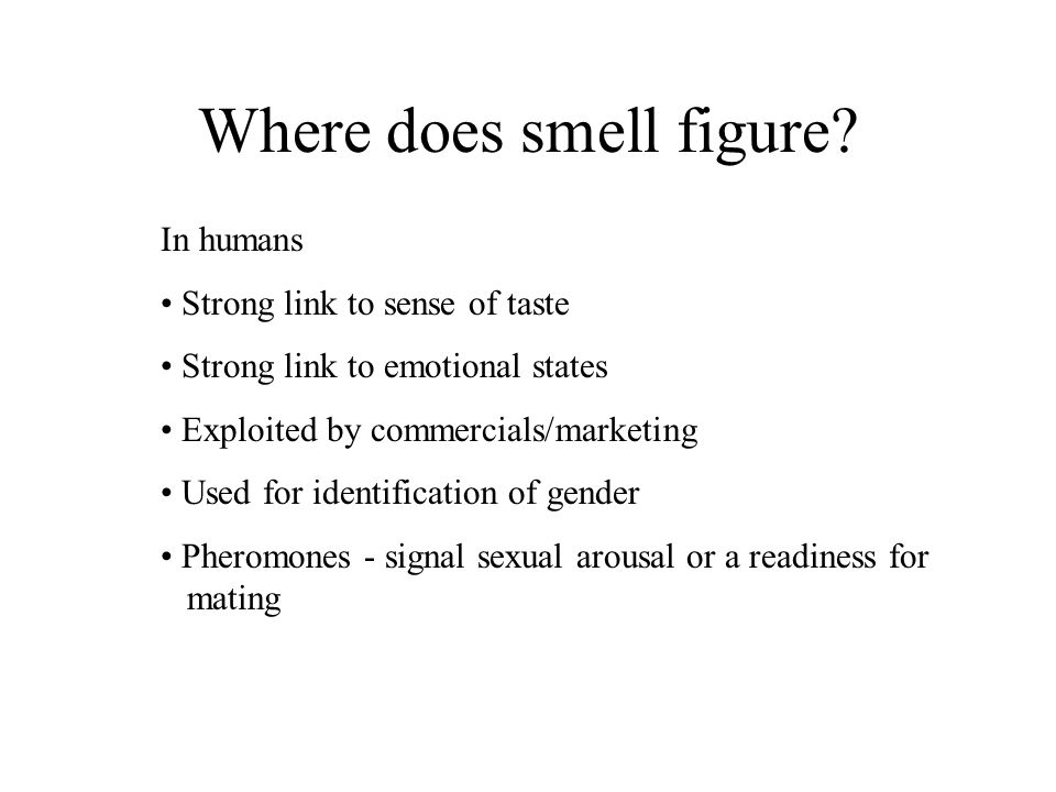 Basics: What do you need for smell.