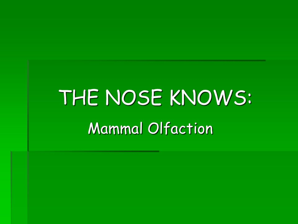 THE NOSE KNOWS: Mammal Olfaction Mammal Olfaction
