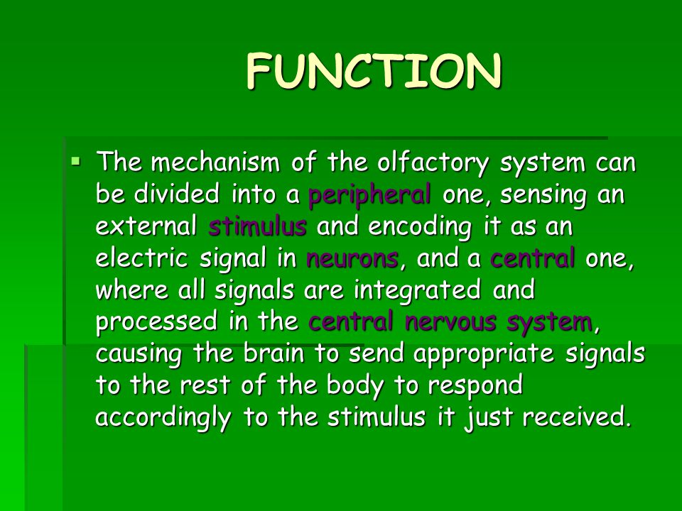 FUNCTION  The mechanism of the olfactory system can be divided into a peripheral one, sensing an external stimulus and encoding it as an electric signal in neurons, and a central one, where all signals are integrated and processed in the central nervous system, causing the brain to send appropriate signals to the rest of the body to respond accordingly to the stimulus it just received.
