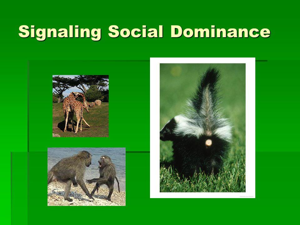 Signaling Social Dominance