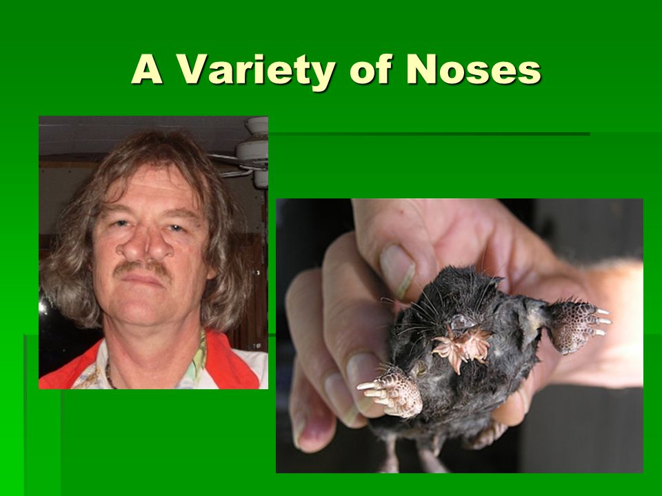 A Variety of Noses