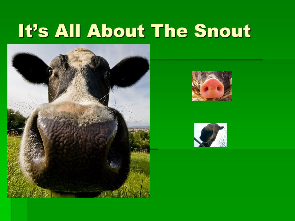 It's All About The Snout
