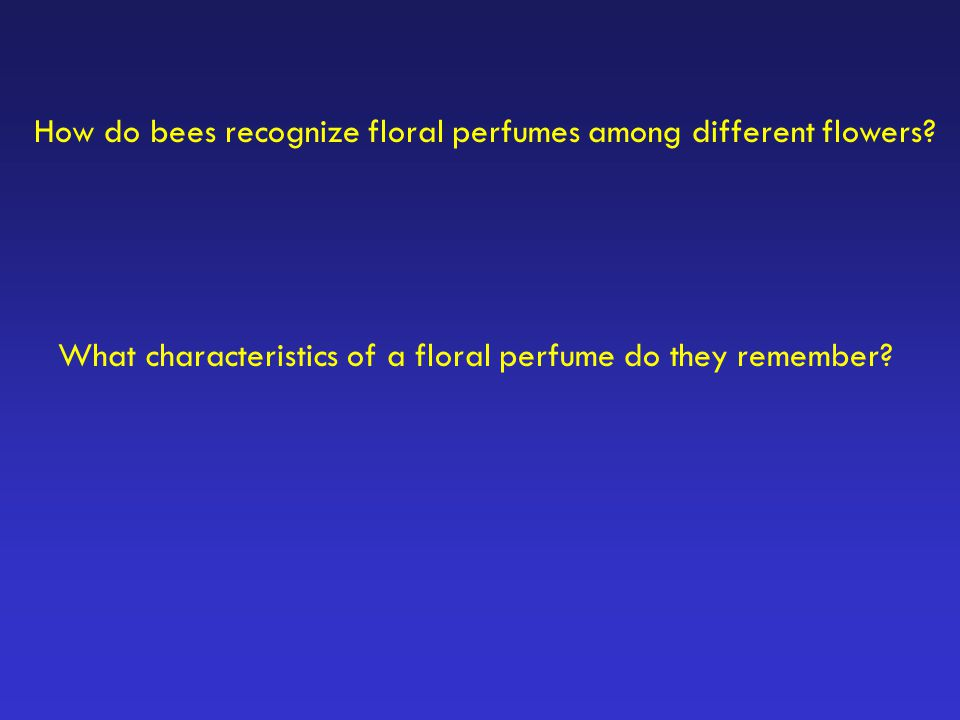 How do bees recognize floral perfumes among different flowers? What characteristics of a floral perfume do they remember?