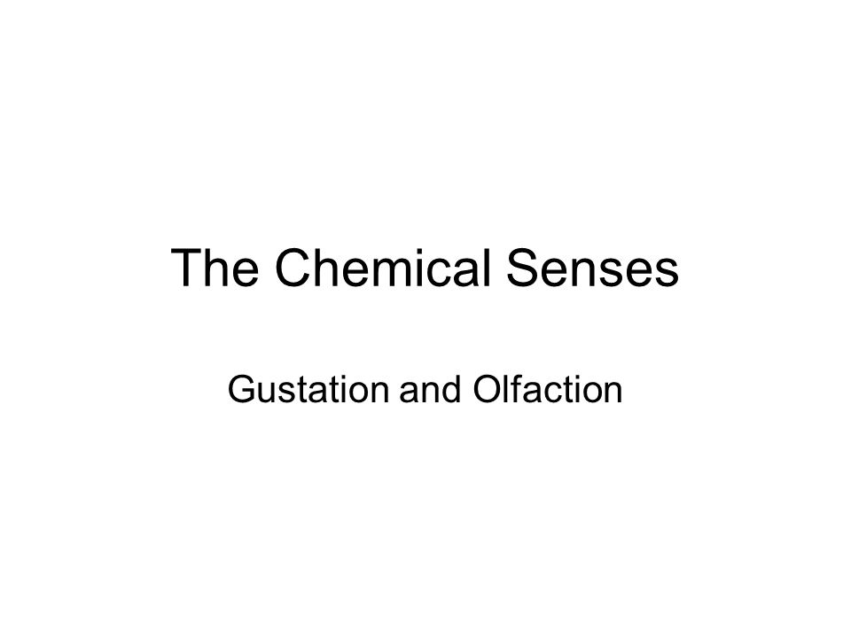 The Chemical Senses Gustation and Olfaction