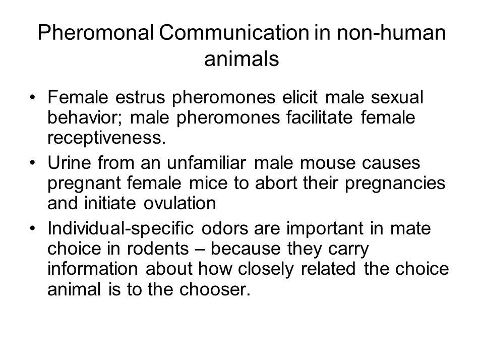 Pheromonal Communication in non-human animals Female estrus pheromones elicit male sexual behavior; male pheromones facilitate female receptiveness.