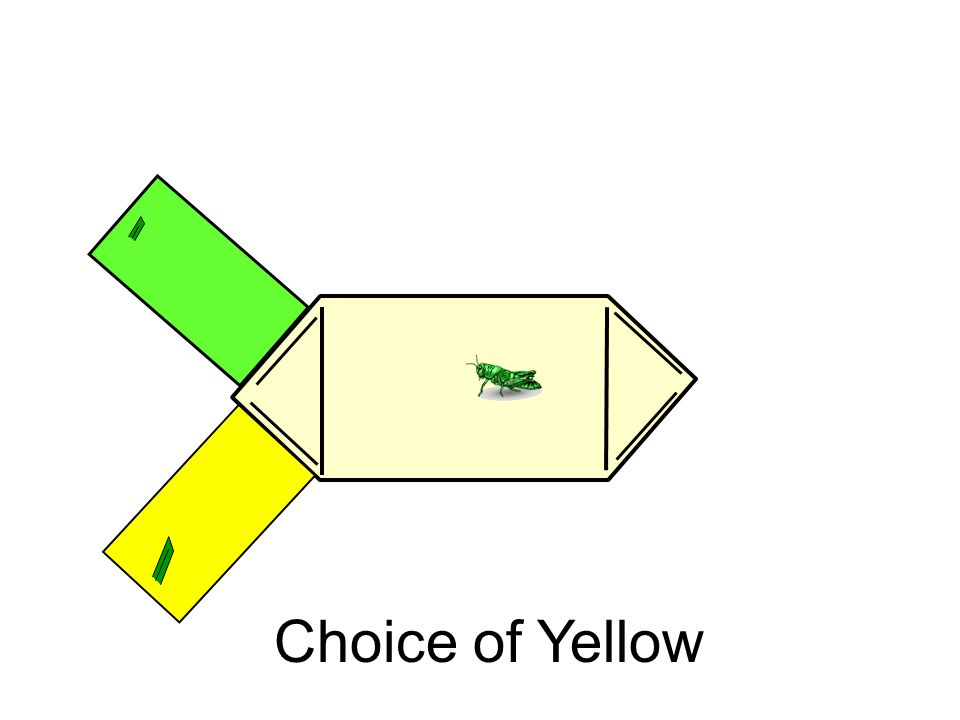 Choice of Yellow