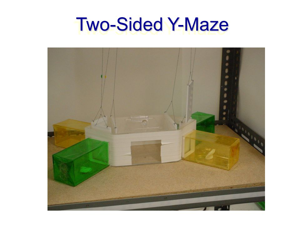 Two-sided Y-maze Two-Sided Y-Maze