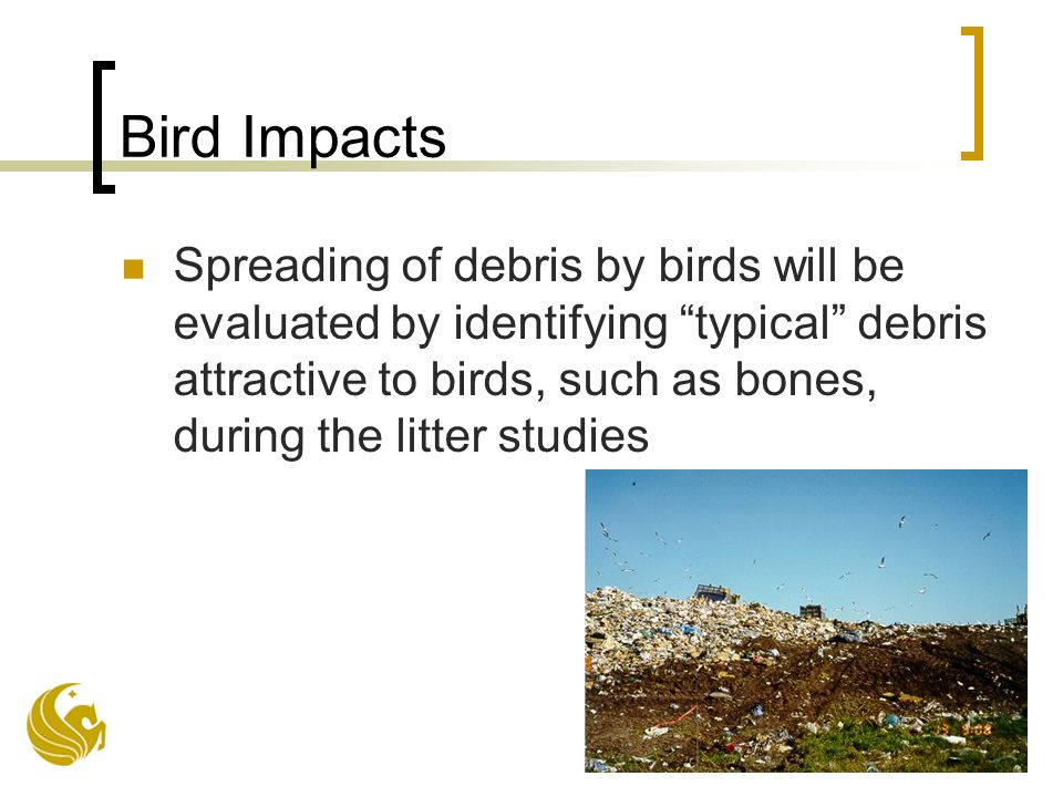 Bird Impacts Spreading of debris by birds will be evaluated by identifying typical debris attractive to birds, such as bones, during the litter studies