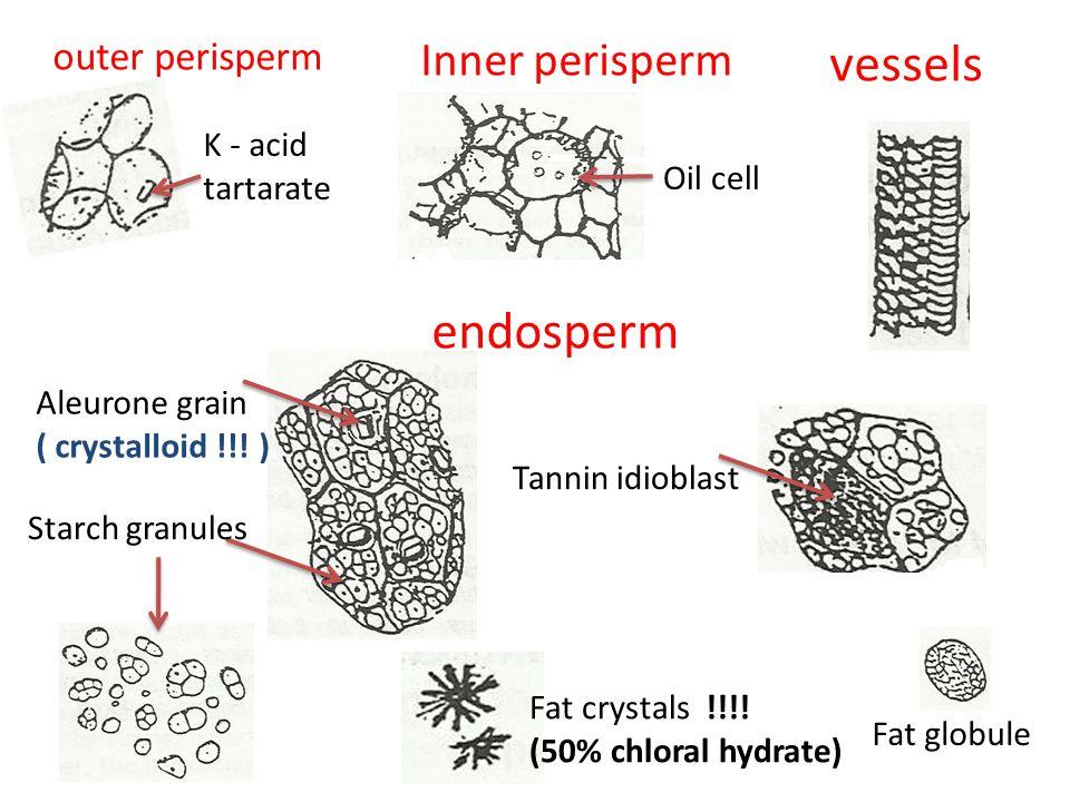 outer perisperm K - acid tartarate Inner perisperm Oil cell Aleurone grain ( crystalloid !!.