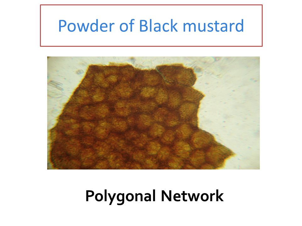 Powder of Black mustard Polygonal Network