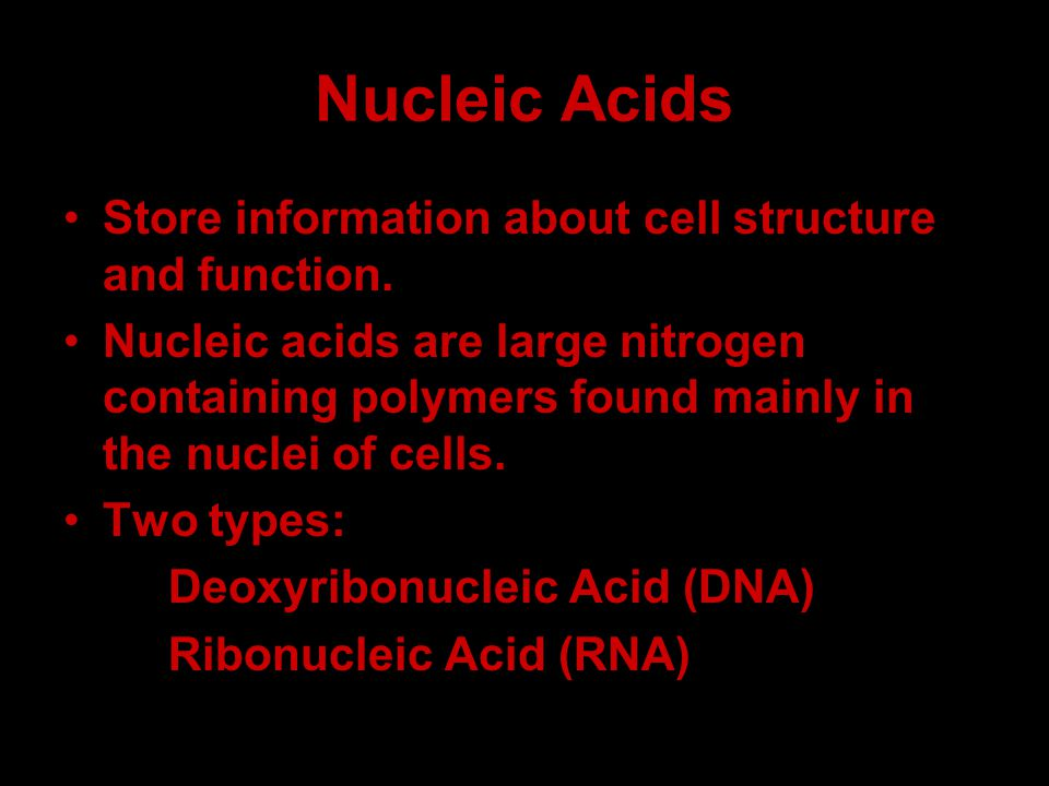 Nucleic Acids Store information about cell structure and function. Nucleic acids are large nitrogen containing polymers found mainly in the nuclei of