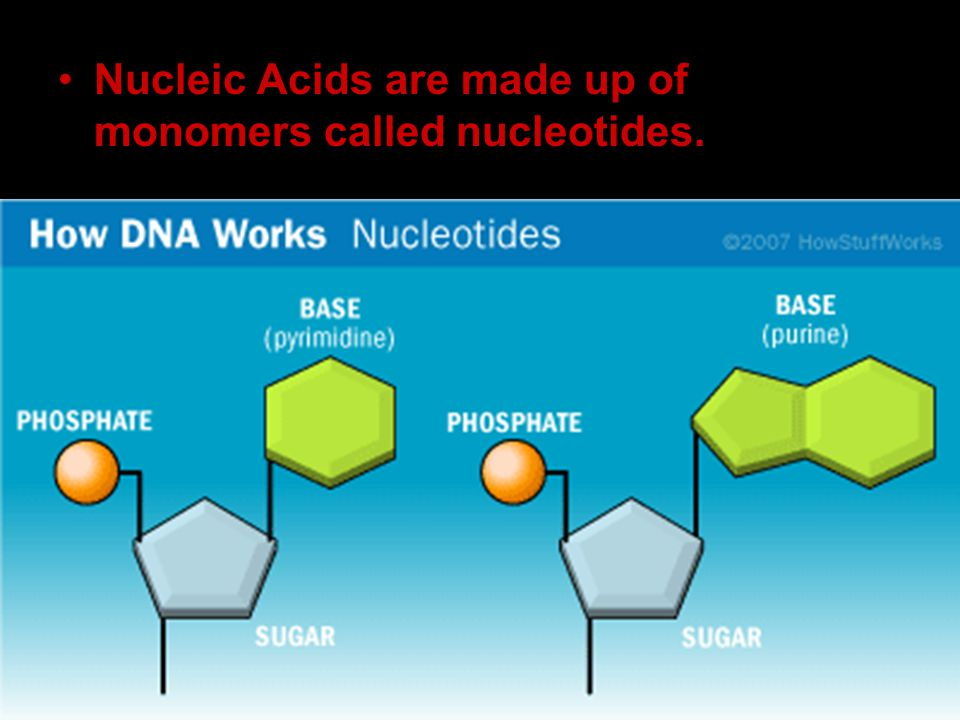 Nucleic Acids are made up of monomers called nucleotides.