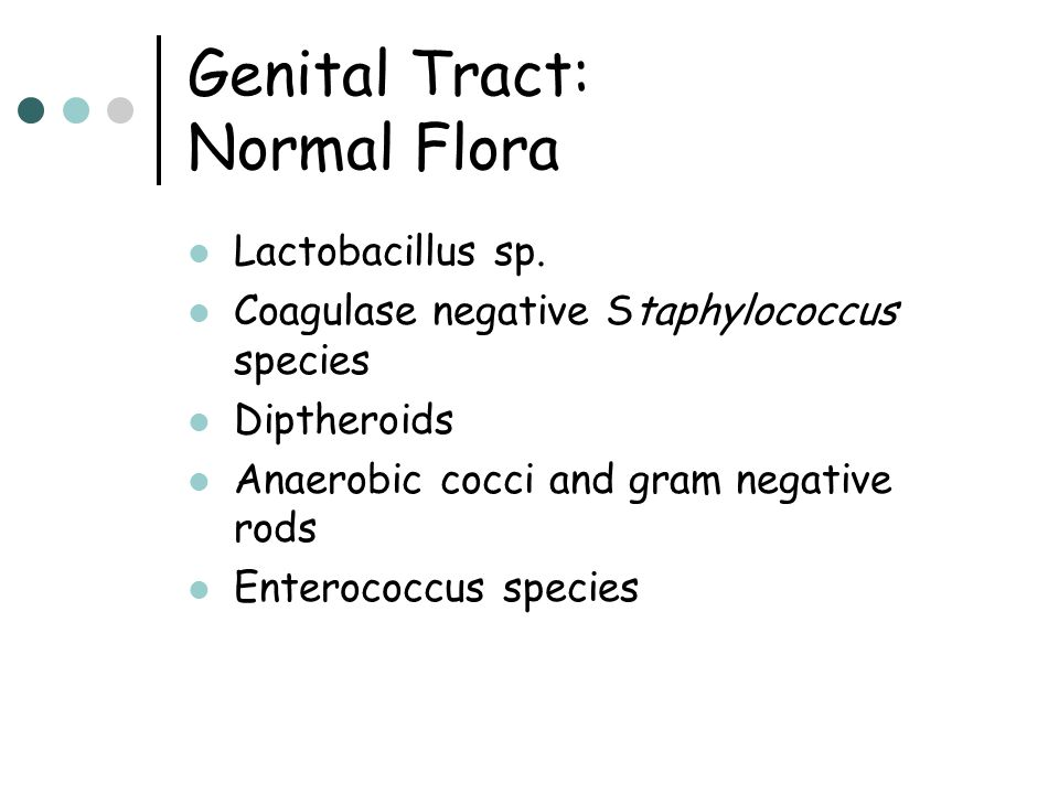 Genital Tract: Normal Flora Lactobacillus sp. Coagulase negative Staphylococcus species Diptheroids Anaerobic cocci and gram negative rods Enterococcu