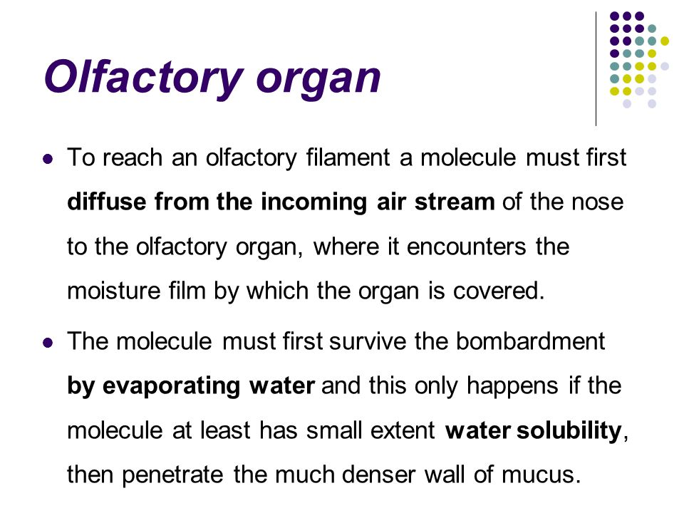 Olfactory organ To reach an olfactory filament a molecule must first diffuse from the incoming air stream of the nose to the olfactory organ, where it encounters the moisture film by which the organ is covered.
