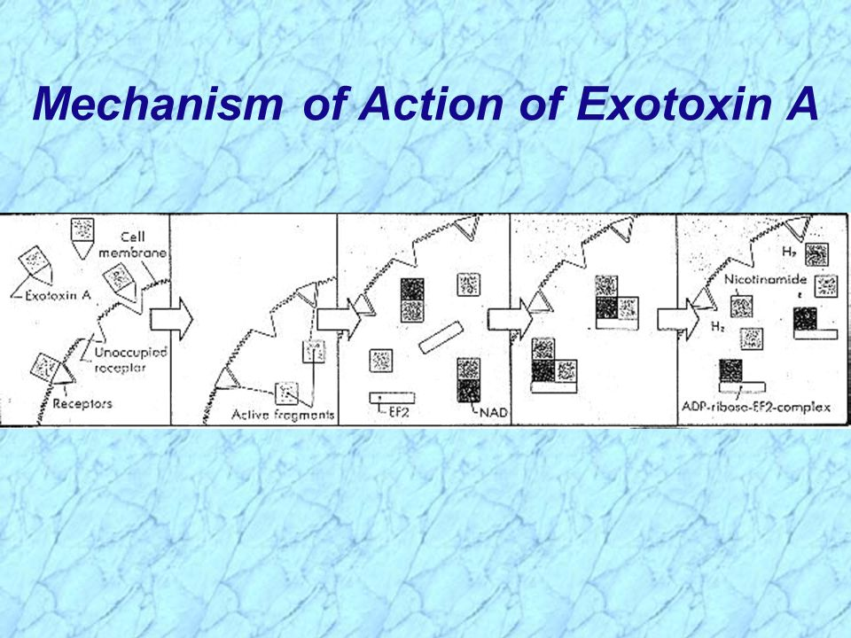Mechanism of Action of Exotoxin A