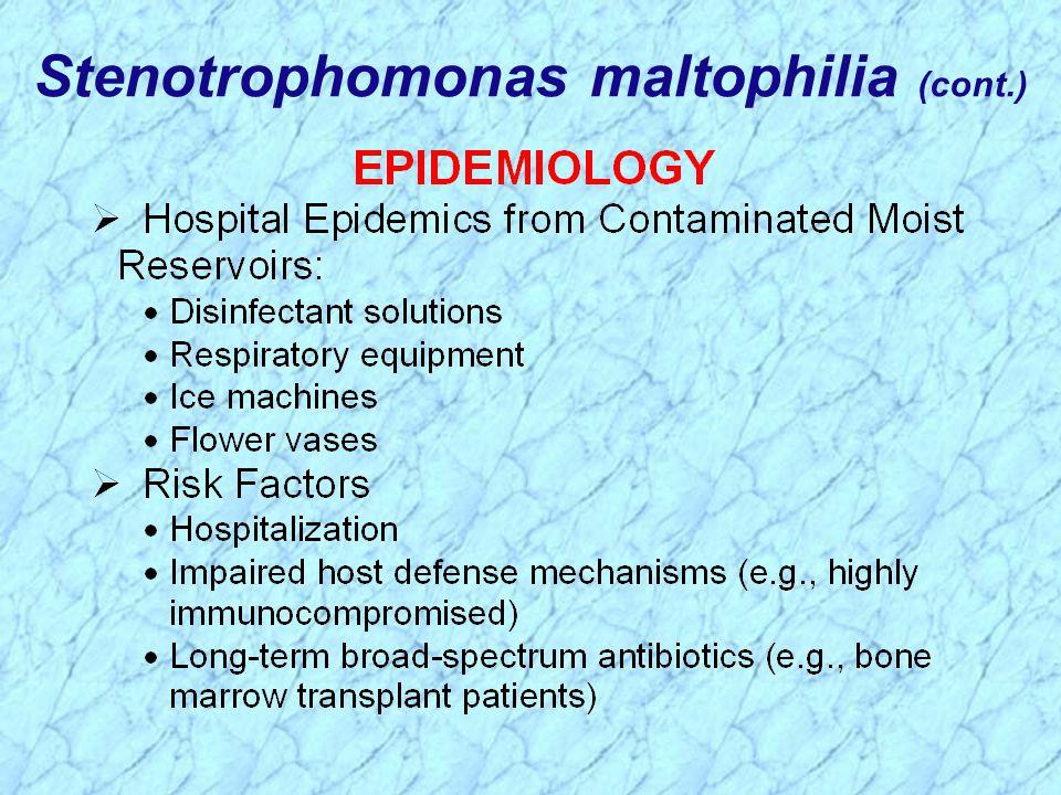 Stenotrophomonas maltophilia (cont.)