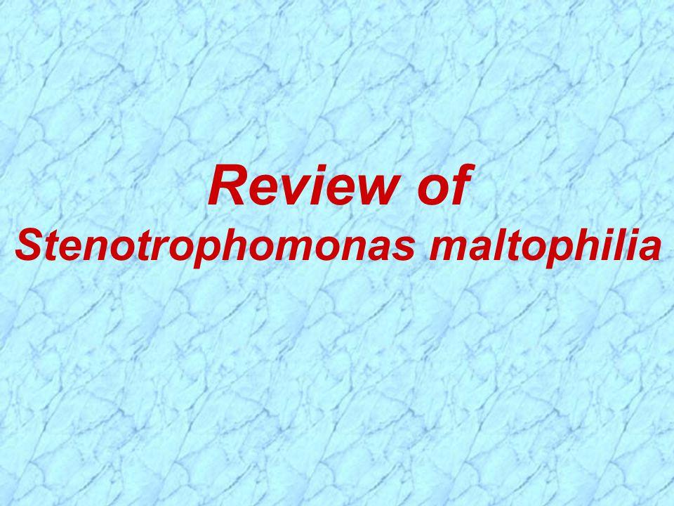 Review of Stenotrophomonas maltophilia