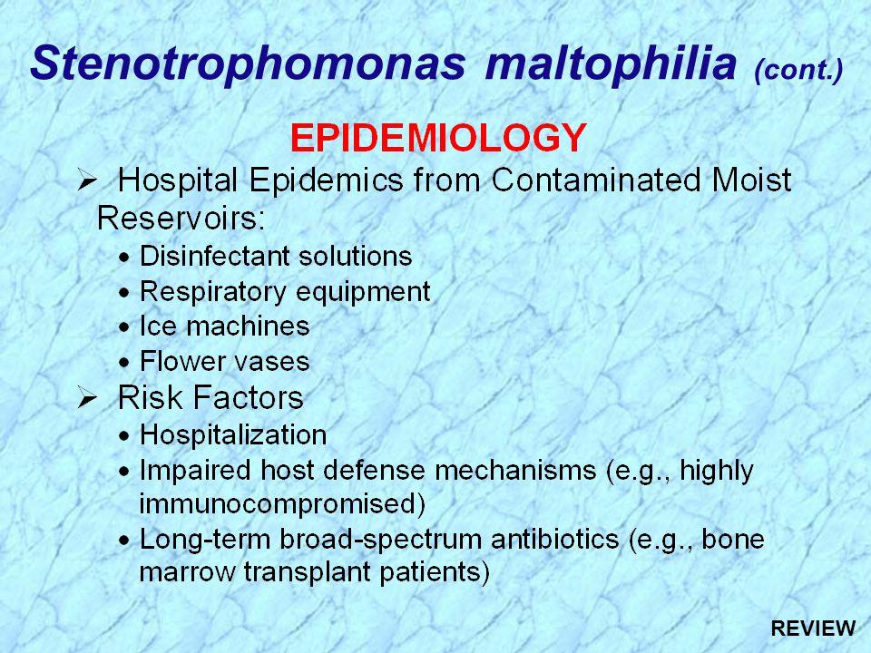 Stenotrophomonas maltophilia (cont.) REVIEW
