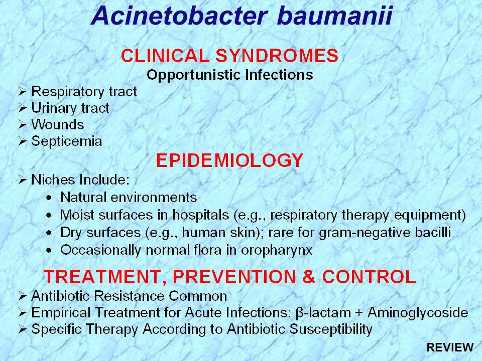 Acinetobacter baumanii REVIEW