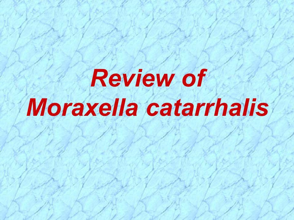 Review of Moraxella catarrhalis