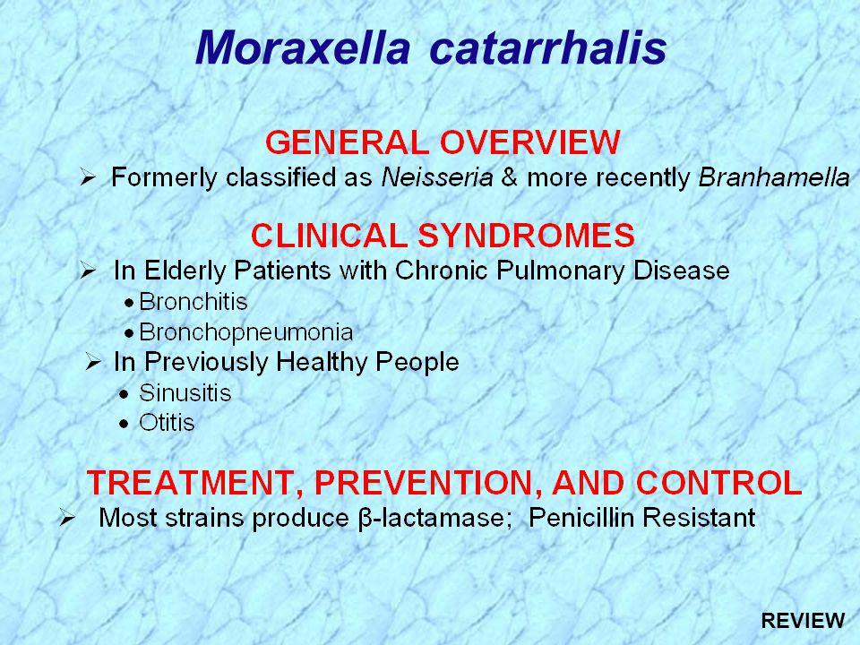 Moraxella catarrhalis REVIEW