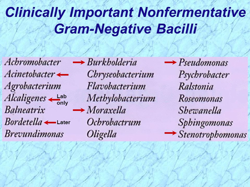 Clinically Important Nonfermentative Gram-Negative Bacilli Later Lab only