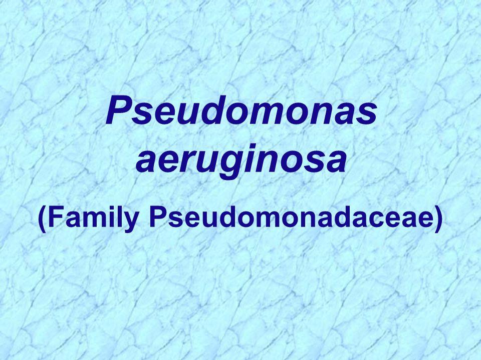 Pseudomonas aeruginosa (Family Pseudomonadaceae)