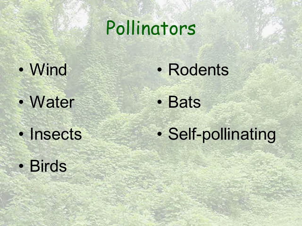 Pollinators Wind Water Insects Birds Rodents Bats Self-pollinating