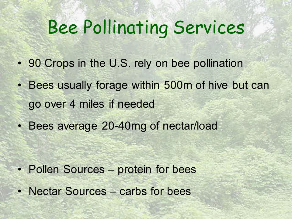 Bee Pollinating Services 90 Crops in the U.S.