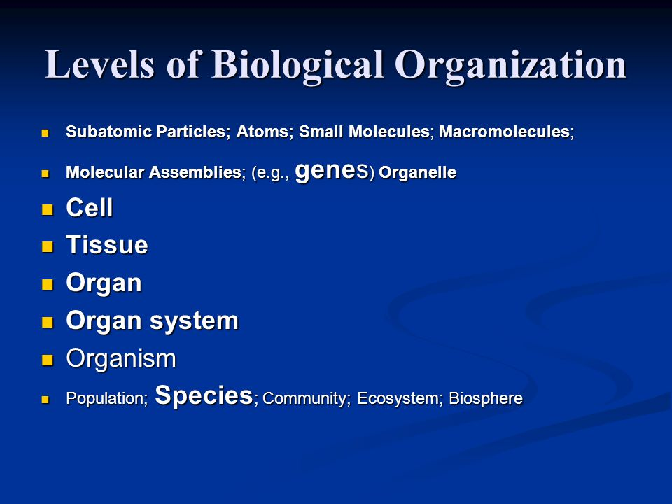 Levels of Biological Organization Subatomic Particles; Atoms; Small Molecules; Macromolecules; Subatomic Particles; Atoms; Small Molecules; Macromolecules; Molecular Assemblies; (e.g., genes ) Organelle Molecular Assemblies; (e.g., genes ) Organelle Cell Cell Tissue Tissue Organ Organ Organ system Organ system Organism Organism Population; Species ; Community; Ecosystem; Biosphere Population; Species ; Community; Ecosystem; Biosphere