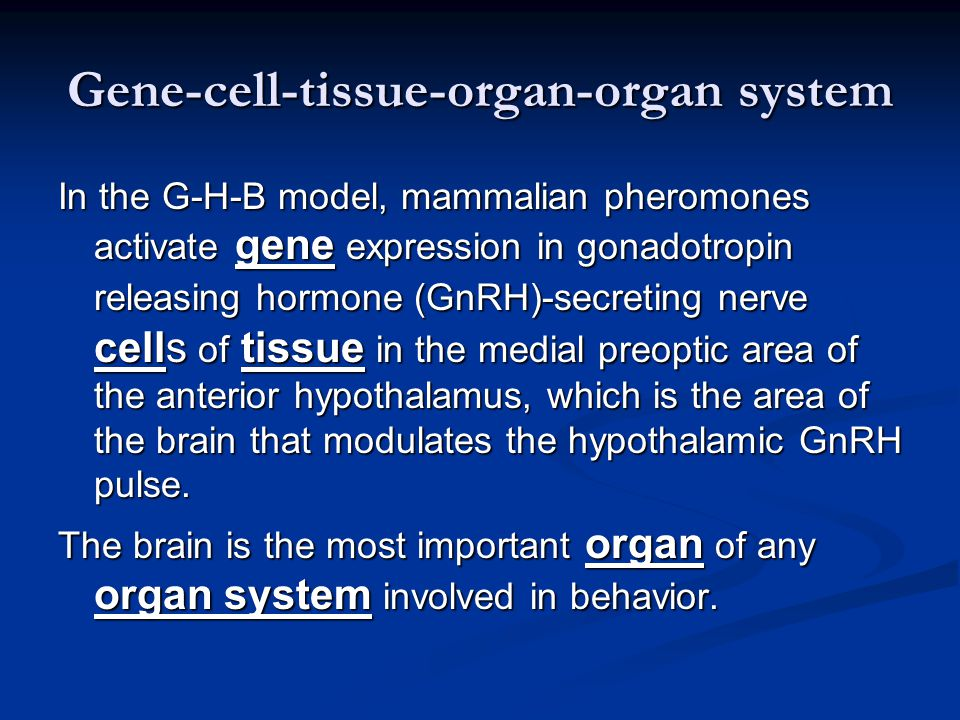 Gene-cell-tissue-organ-organ system In the G-H-B model, mammalian pheromones activate gene expression in gonadotropin releasing hormone (GnRH)-secreting nerve cells of tissue in the medial preoptic area of the anterior hypothalamus, which is the area of the brain that modulates the hypothalamic GnRH pulse.