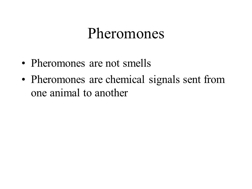 Pheromones are not smells Pheromones are chemical signals sent from one animal to another Pheromones