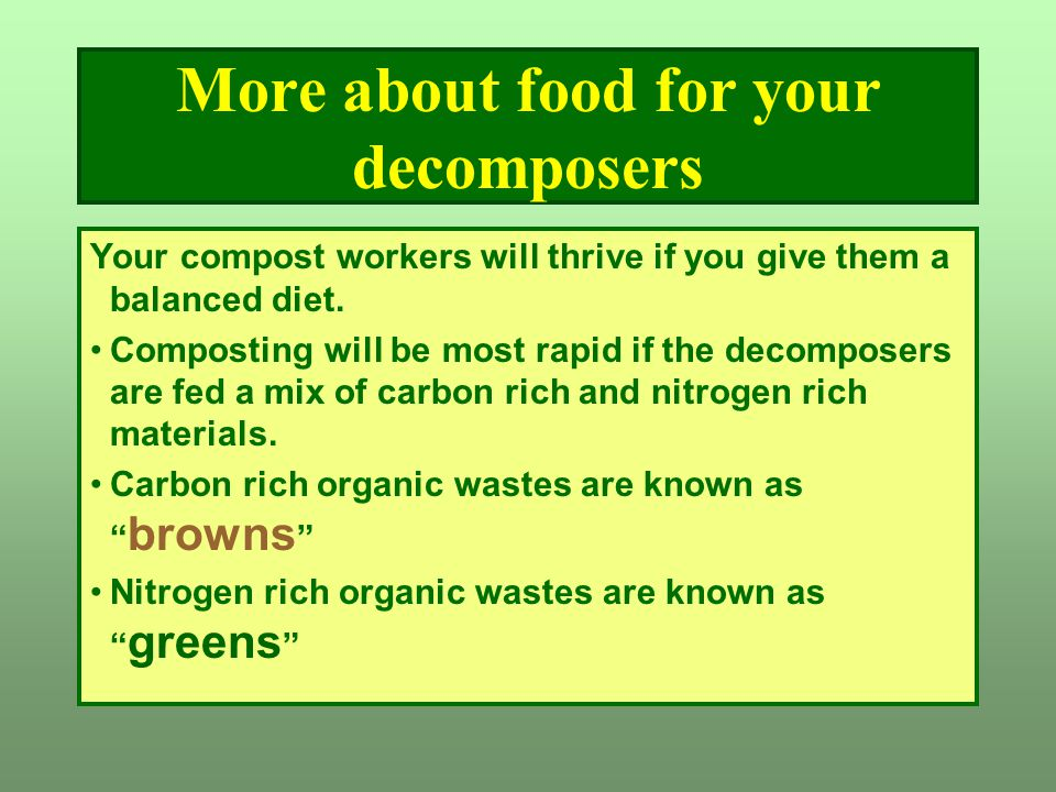 More about food for your decomposers Your compost workers will thrive if you give them a balanced diet. Composting will be most rapid if the decompose
