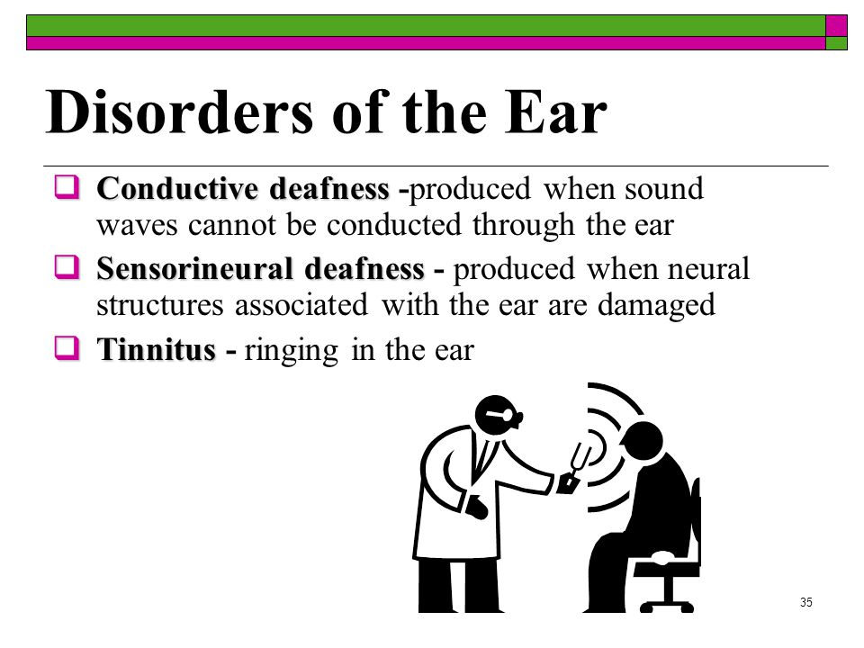 34 Ear and Balance  Brain constantly monitors the position of one's body on the information received from the semicircular canals, eyes and muscles.