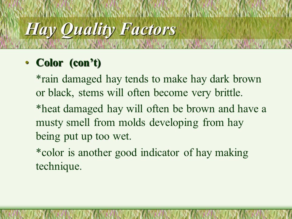Hay Quality Factors Color (con't)Color (con't) *a bale of sun bleached hay should not be judged solely on one factor.